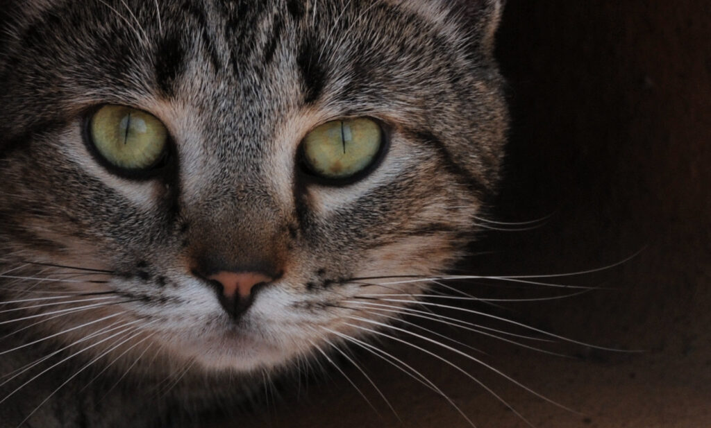 Kitty Portrait -Photography by Gary Crossey.