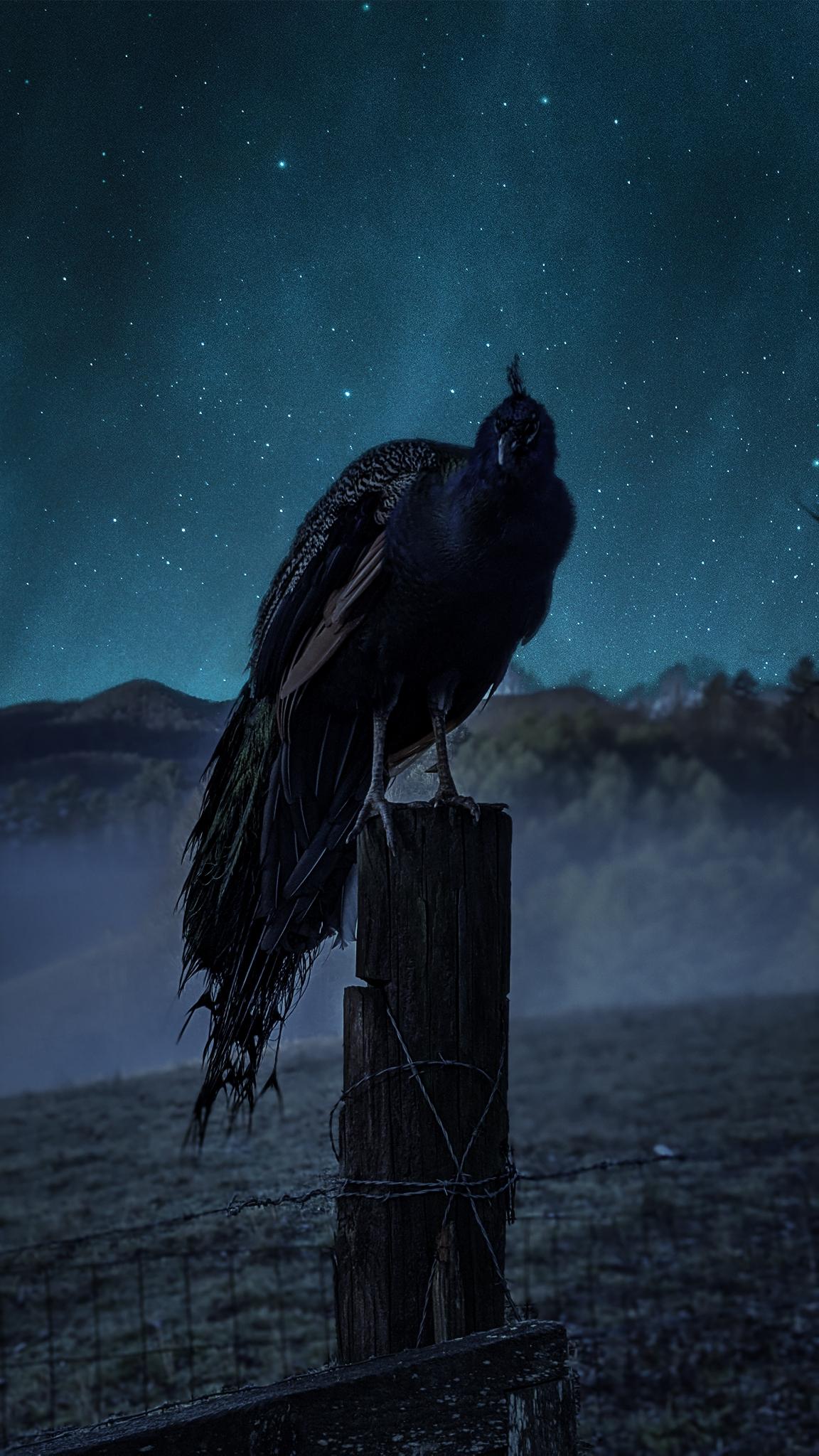Asheville Photography Gary Crossey